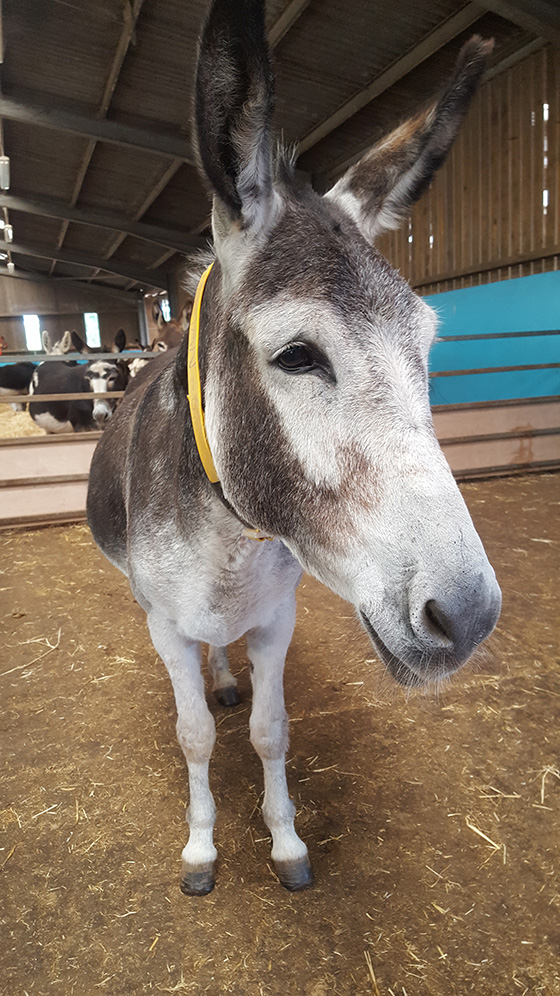 The Sky's The Limit For New Therapy Donkey