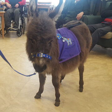 Tiny Teddy Completes First Official Visit With Team Blackberry Supported By Mollichaff Donkey