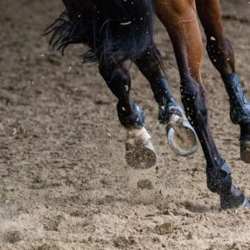 The Importance of Diet in Managing Laminitis