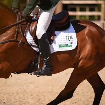 Benefits of HorseHage When Travelling for Competitions
