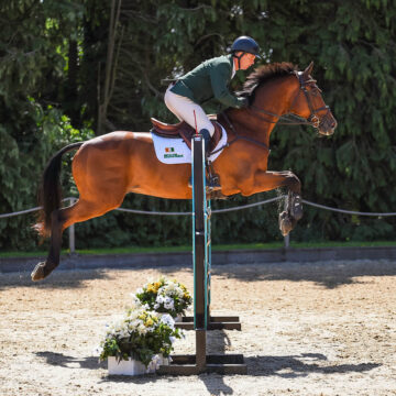 A Competition Horse's Diet: The Importance of Forage